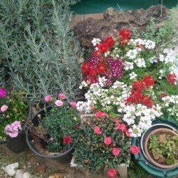 ספא באור יהודה בגינה