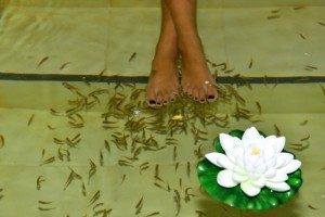 פדיקור דגים מפנק בבריכה